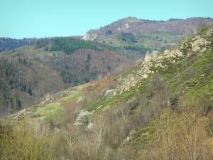 Regional Natural Park of the Ardèche Mountains - Green landscape