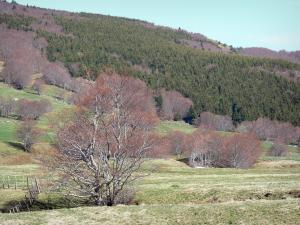 Regional Natural Park of the Ardèche Mountains - Meadows with trees on the edge of a forest