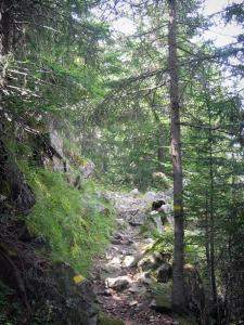 Regional Nature Park of Mercantour - Nature park: waymarked hiking trail lined with trees