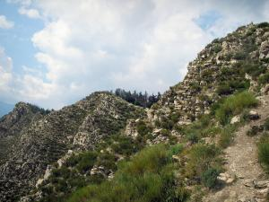 Regional Nature Park of Mercantour - Nature park: rocky crests and vegetation