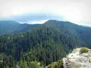 Regional Nature Park of Mercantour - Nature park: mountains dotted with trees (forest)