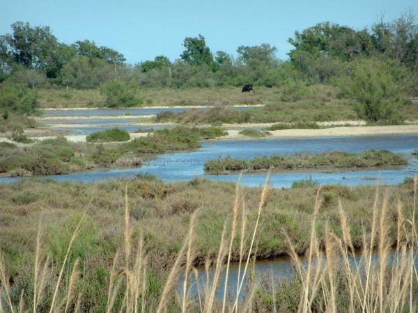 Der regionale naturpark der camargue f hrer tourismus for Info regionale bouche du rhone