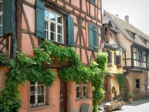 Riquewihr - Colourful half-timbered houses, facades decorated with creepers