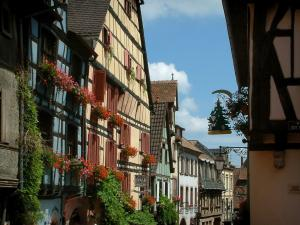 Riquewihr - Colourful half-timbered houses, facades decorated with shop signs and windows decorated with flowers (geranium), creepers
