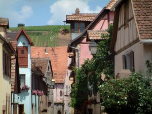 Riquewihr - Hill covered by vineyards overhanging the colourful and flower-bedecked houses of the village