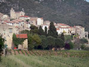 Roquebrun - Church and houses of the village, trees and vineyards, in the Orb valley, in the Upper Languedoc Regional Nature Park