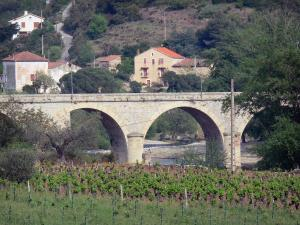 Roquebrun - Bridge over the Orb river, vineyards, houses and trees (Orb valley), in the Upper Languedoc Regional Nature Park