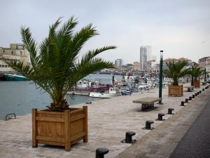 Les Sables-d'Olonne - Quay featuring palm trees, fishing port with its fishermen's boats, houses and buildings
