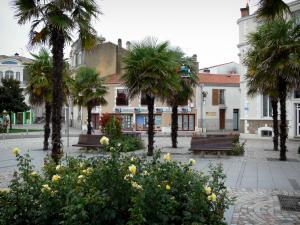 Les Sables-d'Olonne - Square decorated with rosebushes (roses), palm trees and benches, and houses of the town centre