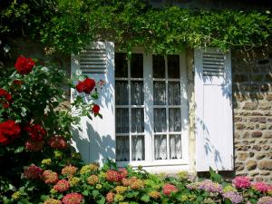 Saint-Céneri-le-Gérei - Window of a house bordered by hydrangeas, blooming rosebush (roses) and a glycine