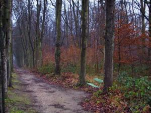 Saint-Cloud park - Footpath, bench, vegetation and trees (forest)