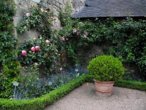 Saint-Cosme priory - Shrub in jar, flowers and climbing roses (pink roses) of the garden
