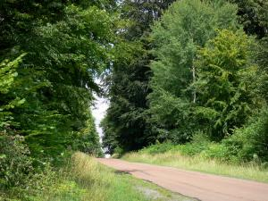 Saint-Gobain forest - Forest road lined with trees