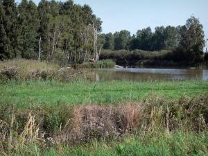 Saint-Gond marsh - Vegetation and trees along the water