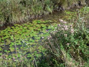Saint-Gond marsh - Vegetation along the water, water lilies