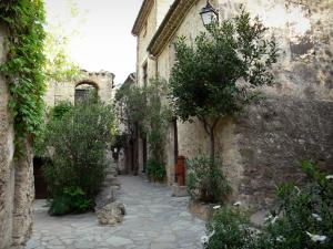 Saint-Guilhem-le-Désert - Shrubs and houses of the medieval village