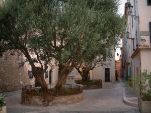 Saint-Tropez - Olive trees and fountain in the middle of a small square and houses of the old town