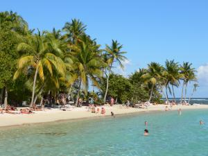 Sainte-Anne - Swimming in the lagoon of the Caravelle beach lined with coconut palms