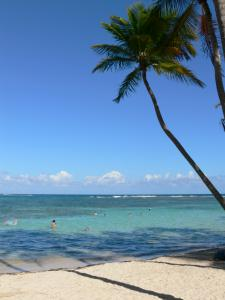 Sainte-Anne - Coconut trees, white sand of the Caravelle beach and bathers in the turquoise waters of the lagoon