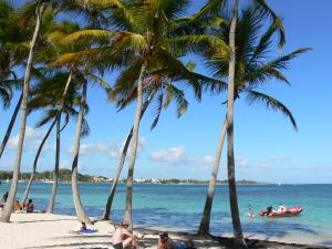 Sainte-Anne - Lazing on the white sand of the Caravelle beach, in the shade of coconut trees, along the lagoon
