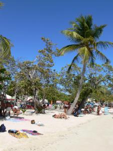Sainte-Anne - Tourists sitting on the white sands of the beach planted with coconut palms and sea grapes