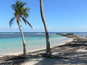 Sainte-Anne - Swimming in the lagoon of the Caravelle beach dotted with coconut palms