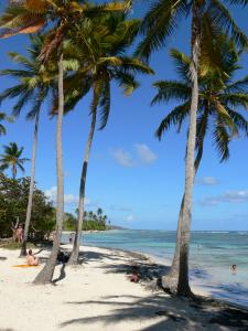 Sainte-Anne - Coconut palms and white sand of the Bois Jolan beach overlooking the turquoise lagoon