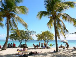 Sainte-Anne - Resting in the shade of coconut palms and sea grapes of the beach