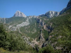 Sainte-Baume massif - Trees, vegetation (scrubland) and rock faces (cliffs)