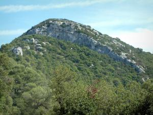 Sainte-Baume massif - Trees, forest and rock faces