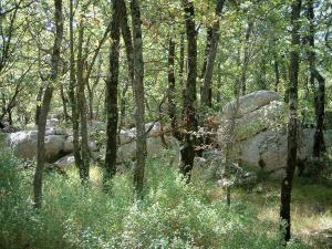Sainte-Baume massif - Forest: vegetation, trees and cliffs