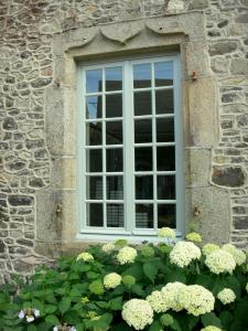 Sainte-Suzanne - Hydrangeas beneath a window