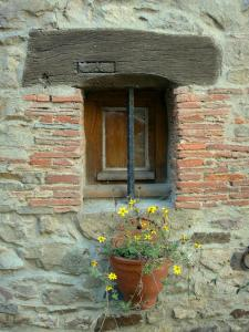 Sainte-Suzanne - Blooming plant in a pot on facade of a house