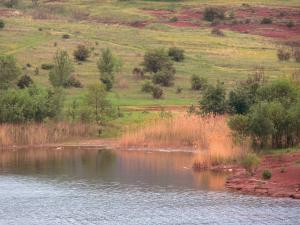 Salagou lake - Reservoir, shore, reeds, cliff red, trees and grassland