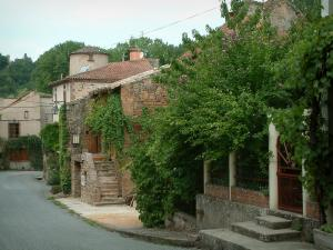 Salles - Houses of the village with shrubs and plants