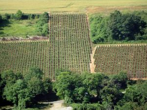 Sancerre vineyards - Trees and hill covered with vines (Sancerrois)