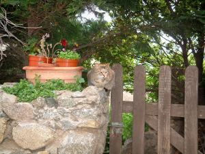 Sant'Antonino - Low stone wall with a cat and flowerpots, a wooden wicket and trees