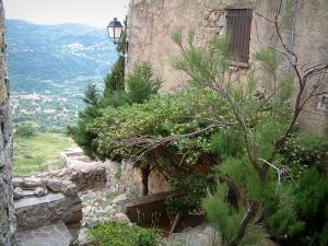 Sant'Antonino - Trees, plants and house of the village (in the Balagne region), hill in background