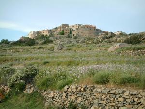 Sant'Antonino - Low stone wall, wild flowers, grassland and village of Sant'Antonino (in the Balagne region)