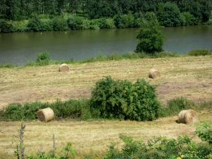 Sarthe valley - Hay bales in a meadow beside River Sarthe