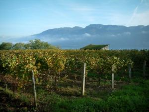 Savoie vineyards - Vineyards in autumn, small house, Bourget lake and Bauges massif in background