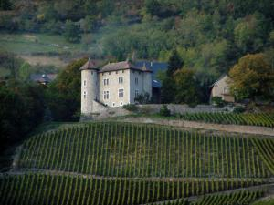 Savoie vineyards - Sloping vineyards, castle and forest