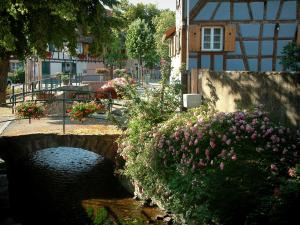 Scherwiller - Small bridges decorated with flowers spanning the River Aubach, trees and colourful half-timbered houses