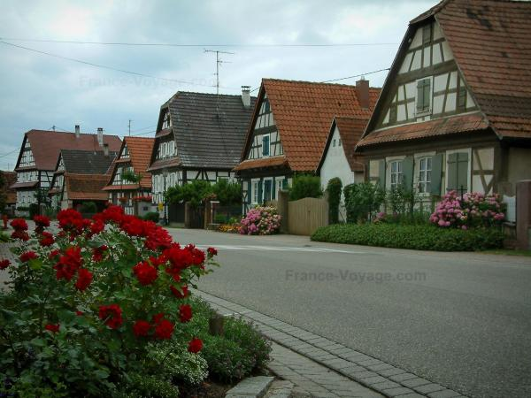 Seebach - Rosebush, road and half-timbered houses decorated with flowers