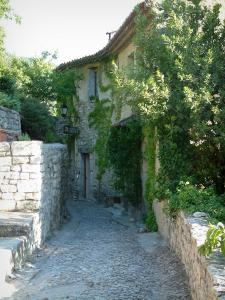 Séguret - Narrow paved street and stone house decorated with creepers
