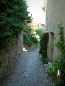 Séguret - Narrow paved street in the village with shrubs and plants