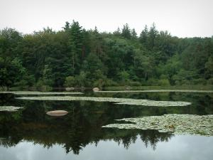 Sidobre - The Merle lake with water lilies and granite rocks (blocks), reeds and trees of the forest reflected in water (Upper Languedoc Regional Nature Park)