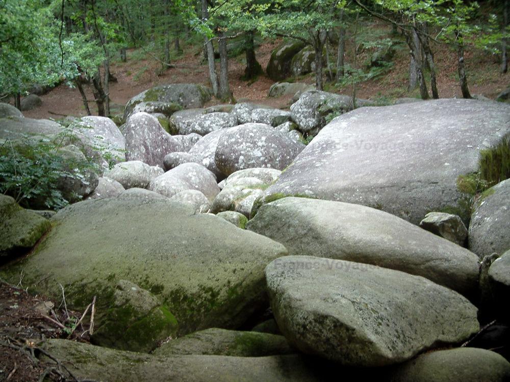 Le Sidobre - Sidobre: Chaos de la Resse : rivière de rochers (blocs) et arbres (forêt), dans le Parc Naturel Régional du Haut-Languedoc