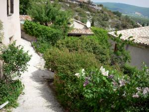 Simiane-la-Rotonde - Narrow street lined with vegetation and houses of the Provençal village