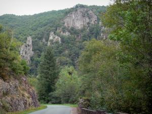 Sioule gorges - Road lined with trees and cliffs